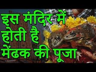 इस मंदिर में होती है मेंढक की पूजा | मन्नतें मांगने दूर-दूर से आते हैं लोग | Adbhut Kahaniyan