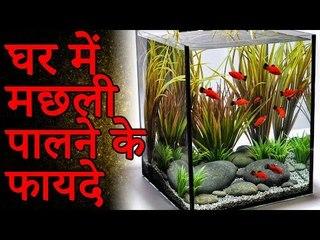 जानिए क्या है घर में मछली पालने के फायदे | मछलियां रखने का लाभ | Adbhut Kahaniyan