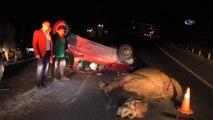 Karayoluna çıkan deveye 2 otomobil çarptı; deve telef oldu, 4 kişi yaralandı