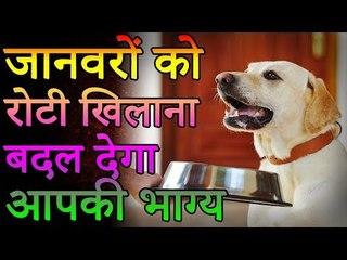 जानवरों को रोटी खिलाना बदल देगा आपका भाग्य   Desi Totke - देसी टोटके