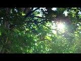 Musique Relaxante Piano, Musique New Age Relaxation, méditation Musique
