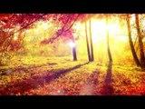 1 HEURE - Méditation Relaxer Musique, Nature Sounds, Musique Relaxante, Musique Positive