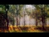 Musique de méditation Relax Corps de l'esprit: Musique de guitare relaxante, Musique apaisante