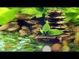 Musique Zen - Soulagement du stress Musique, Musique spirituelle, Méditation, Anti-stress