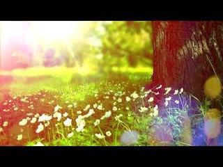 Relaxing Nature Sounds - Musique de méditation apaisante, calme des sons d'oiseaux