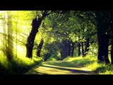 Forest Sounds With Relaxing Music - Musique de sommeil, Nature Sounds, Birds Chirping