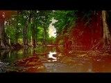 Sons de forêt, Musique de détente - Sons de méditation, Nature, Sons d'étude, Relaxation apaisante
