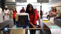 Permiten viajes con mascotas en subterráneo de Buenos Aires