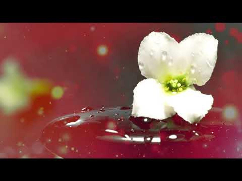 Zen Music - Усилие стресса, музыка внутреннего мира, успокаивающая музыка
