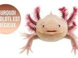 3 raisons pour lesquelles vous devez faire attention à l'Axolotl