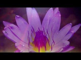 Музыка для медитации: Расслабляющая музыка, Фокусное исследование, Спа Фоновая музыка