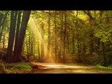 Música de guitarra relajante: Maravillosa música de guitarra, sueño profundo, meditación