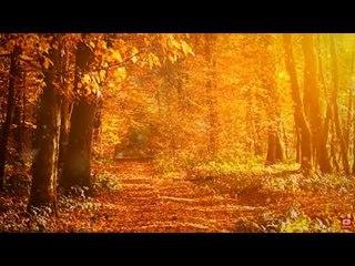 Meditación relajante Música de Santoor: música de paz interior, música relajante, música para dormir