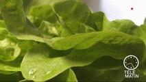 Santé - Les légumes à feuilles vertes pour booster mon cerveau