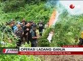 Tim Satgas dan BNN Temukan Ladang Ganja 8,9 Hektar