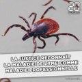 La justice reconnaît la maladie de Lyme comme maladie professionnelle