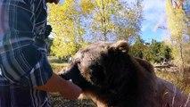 Friendly Dangerous Animals as Pets / Unusual Animals