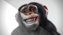 "CGI 3D Breakdowns HD ""Making of CGI Goodyear Chimpanzee"" by Estúdio Notan | CGMeetup"
