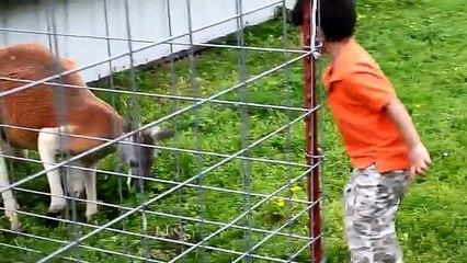ZOO COMPILATION-Kids At The ZOO- Petting,Safari Animals,Feeding Farm Animals-Kids Z Fun-Gentry Ar