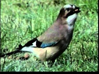 British Country Birds