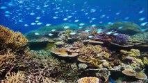 Planète Bleue - Épisode 1 - Voyage au coeur des océans (1er partie)