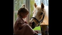 Cute And funny horse Videos Compilation cute moment of the horses Soo Cute! #24