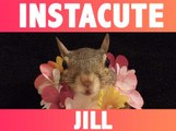 Alerte cute : Découvrez Jill, l'écureuil qui fait fondre Instagram !