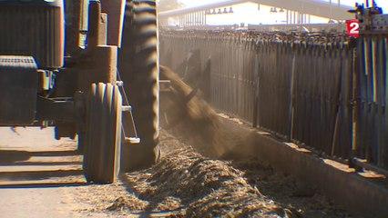 Les mega-fermes en Arizona