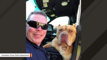 'Vicious' Dog Cops Got Called For Turns Out To Be 'Really Loving'