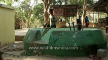 India's Well of fertility in Badaun, Uttar Uttar Pradesh