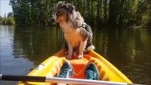 Ce chien qui lutte contre le sommeil au bord d'un kayak fait des millions de vues