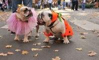 Des costumes d'Halloween pour votre chien ou votre chat
