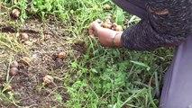 Alpes-de-Haute-Provence : Les stars de Forcalquier ont une coquille ! Découvrez l'élevage d'escargots Apis Helix