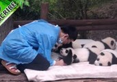 Wonderful Moments of Pandas Cuddling and Hugging Will Melt Your Heart