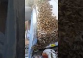 Man Drives Home With Swarm of Bees Loose Inside His Truck