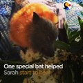 This woman had such bad panic attacks that she was hospitalized, but she started feeling better when she met a very special bat — who helped her so much, she ha