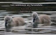Les animaux en farandole: saison 3: épisode 13