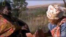 Snake Documentary Documentary Predators- THE SECRET LIFE OF SNAKES [Classic Documentary!]