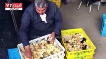 """أصحاب مزراع دواجن """"برما"""" بالغربية يستغيثون بالحكومة لوقف نفوق الطيور"""