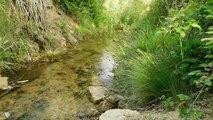 sonidos de la naturaleza/ rio pesebre /con musica de piano de fondo .