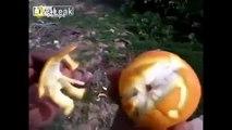 VIDEO DIVERTENTE - Come sbucciare un arancia in modo divertente