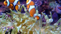 Sea Animals for Kids   Top 20 Best Sea Animals Videos for Children   Learn Sea Animals Names