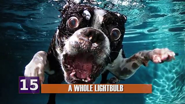 WEIRDEST Things Ever Found in Animals!