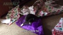 chats stupides vs Compilation de papier - chats mignons et drôles