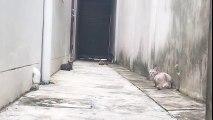 Un chat esquive d'autres chats