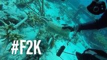 Ainda dá tempo de salvar os oceanos?