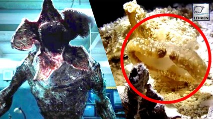 Bizarre Sea Creature Resembles Real-Life Stranger Thing's Demogorgon