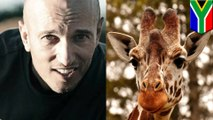 Giraffe takes out filmmaker in South African game reserve