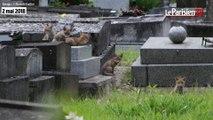 Des renardeaux dans le cimetière d'Ivry-sur-Seine