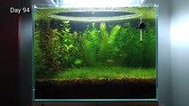 Un aquarium sans filtre, sans CO2 et sans fertilisant